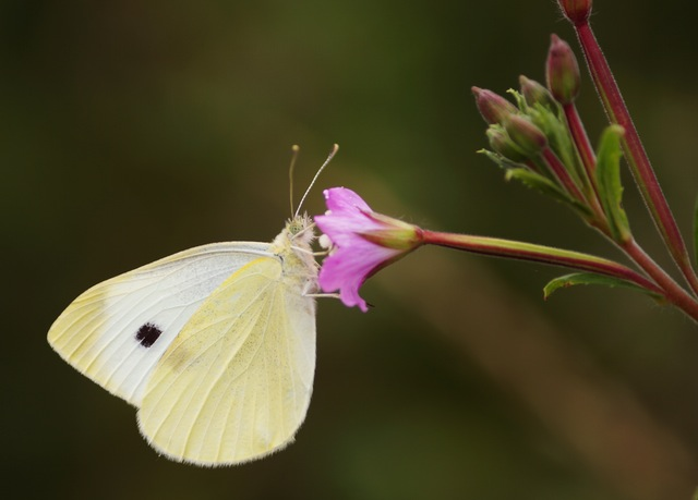 yellow-animal-flower-pink