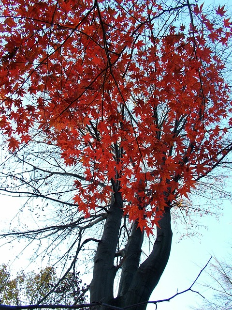 autumn-76850_640