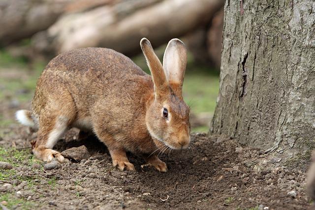 bunny-164948_640