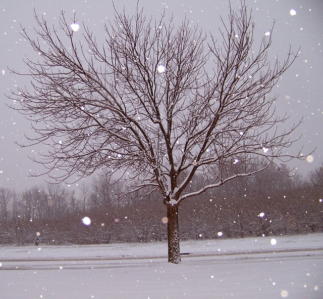 snow-18520_640